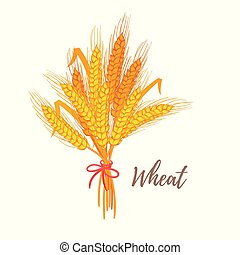 illustration of cereals - wheat