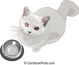 vector cat requests that have - British lilac cat sits in...