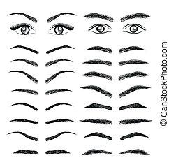 vector, ceja, ojos, mujeres, hombre