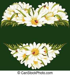 Vector chamomile frame