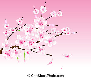 vector cherry blossom branch