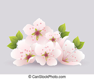 vector cherry flowers