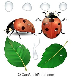 Vector close-up realistic ladybugs, water drops and leaves...