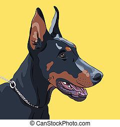 Close-up portrait of serious dog Doberman Pinscher breed