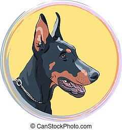 vector closeup serious dog Doberman Pinscher breed -...