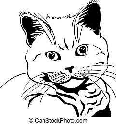 black and white sketch closeup portrait british cat looking seriously