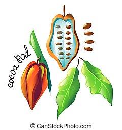 vector cocoa pod