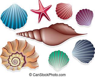 vector, colección, conchas de mar