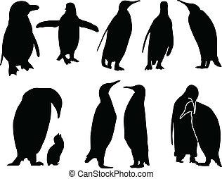 vector, -, colección, pingüino