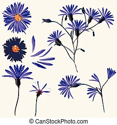 Vector collection of blue wild flowers for design