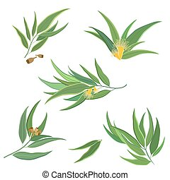 Vector collection of eucalyptus leaves, flowers and seeds