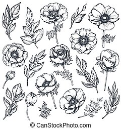 Vector collection of hand drawn anemone flowers