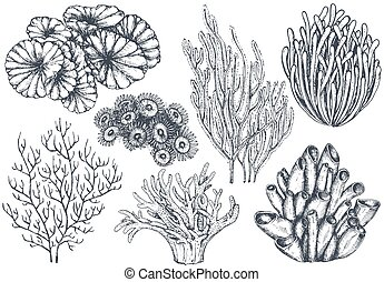 Vector collection of hand drawn ocean plants and coral reef elements