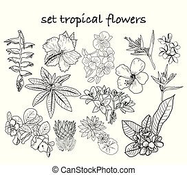 collection of hand drawn tropical flowers, leaves, jungle plants.