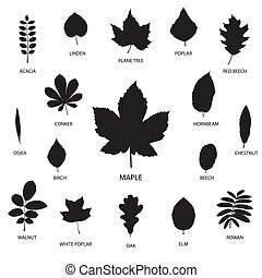 Vector collection of leaf silhouettes isolated on white background