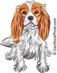vector, color, bosquejo, de, el, perro, rey charles spaniel...