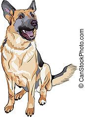 vector, color, bosquejo, perro, pastor alemán, casta