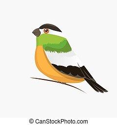 Vector color image of a bird, bird design icon.