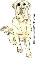vector color sketch dog breed white labrador retrievers sitting
