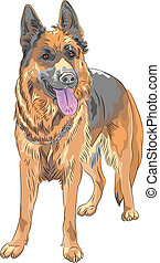 vector color sketch dog German shepherd breed - portrait of...