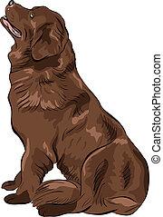 vector color sketch dog Newfoundland hound breed sitting - ...