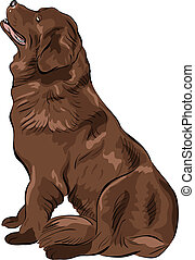 vector color sketch dog Newfoundland hound breed sitting