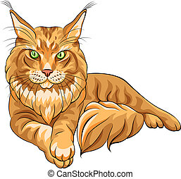 Vector color sketch fluffy Maine Coon cat - Vector color...