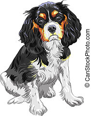 Vector color sketch of the dog Cavalier King Charles Spaniel...