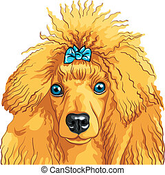 vector color sketch of the dog red Poodle breed isolated on...