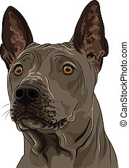 vector color sketch Thai Ridgeback Dog breed closeup