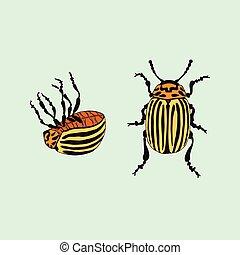 Vector Colorado potato beetle (leptinotarsa decemlineata)