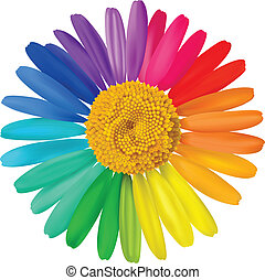 Vector colorful daisy. Vector beautiful art illustration.