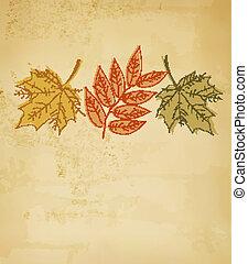 vector., coloridos, leaves., outono, retro, fundo