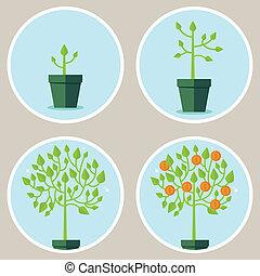 vector, concepto, crecimiento