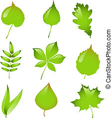 vector, conjunto, aislado, leaves.