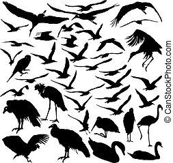 vector, conjunto, aves