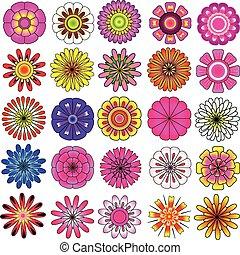 vector, conjunto, flor, colorido