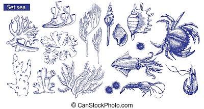 vector, conjunto, habitantes, ilustración, corals., marina