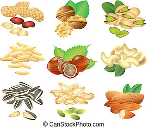 vector, conjunto, nueces, semillas