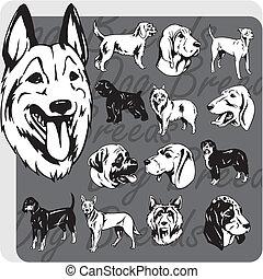 vector, conjunto, -, perro, razas