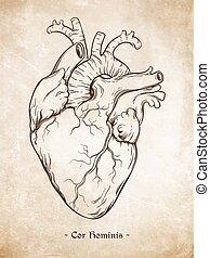 vector, corazón, humano