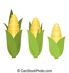 Vector corn in flat style
