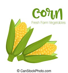 Vector corn isolated on white background.Vegetable illustration for farm market menu. Healthy food design poster. Cartoon style vector illustration