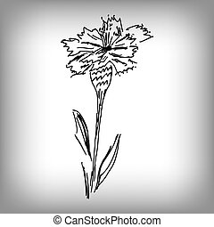 Vector cornflower. Illustration by hand. Monochrome drawing.