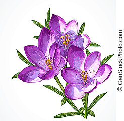 Vector Crocus Spring Flowers for your design.