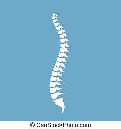 vector, cuerda, espinal, sano, icono
