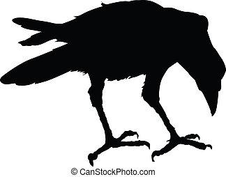vector, cuervo