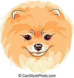 vector cute dog Pomeranian