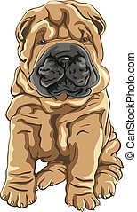vector cute red Shar Pei dog puppy smiles - color sketch of...
