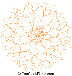 Vector dahlia flower. - Vector dahlia flower isolated on...
